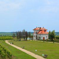 Pourquoi choisir la Provence pour son domaine viticole ?